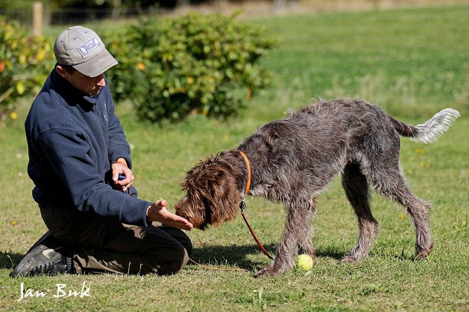 Online: Belønningsbasert fuglehundtrening Trinn 2
